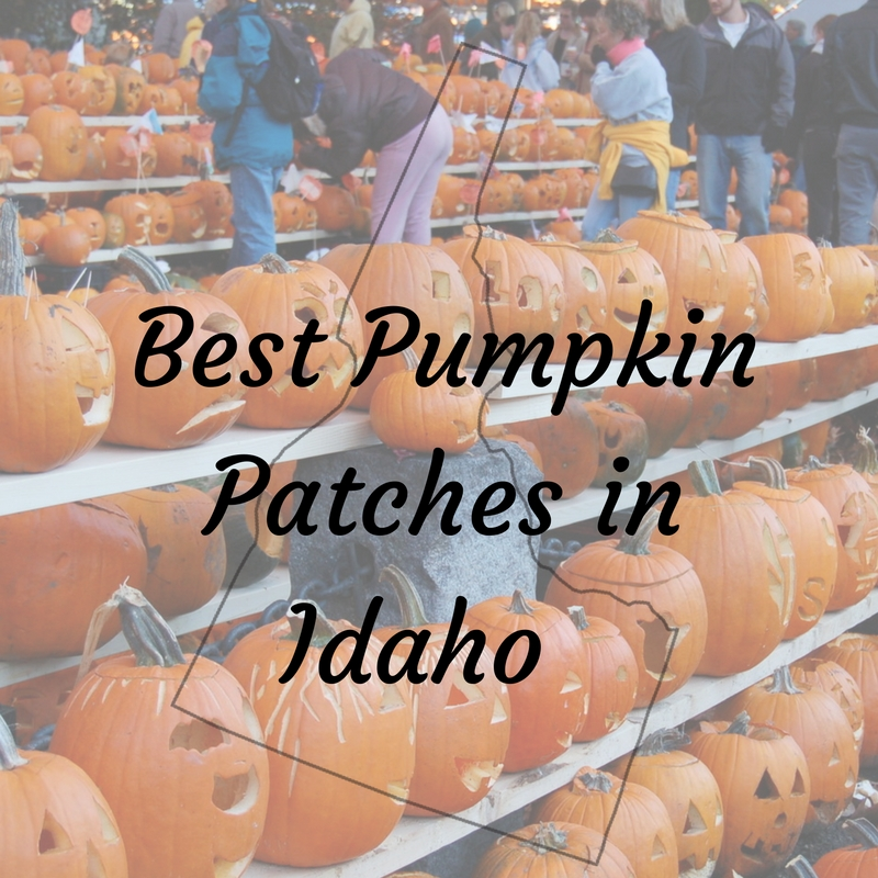 Best Pumpkin Patches In Idaho