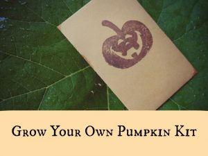 grow-your-own-pumpkin-kit-950x712